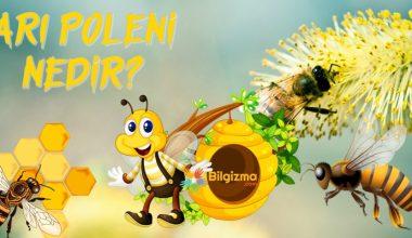 Arı Poleni Nedir? Özellikleri, Faydaları ve Yan Etkileri