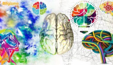 Hipokampus Hakkında Bilgi; Nedir? İşlevi ve Görevleri