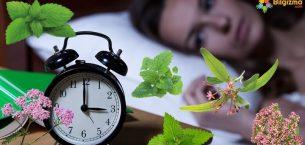 Uyku Getiren Bitkiler
